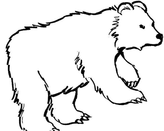 Как поэтапно нарисовать медведя