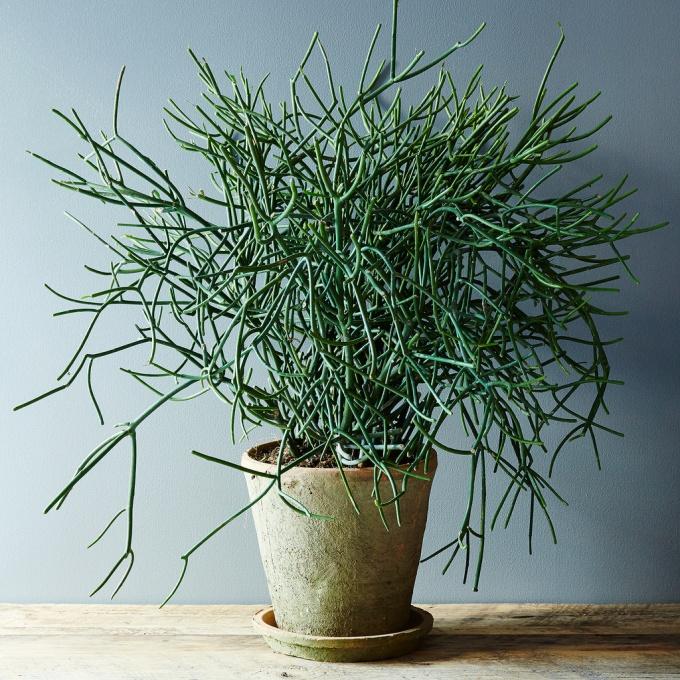 5 стойких и неприхотливых комнатных растений