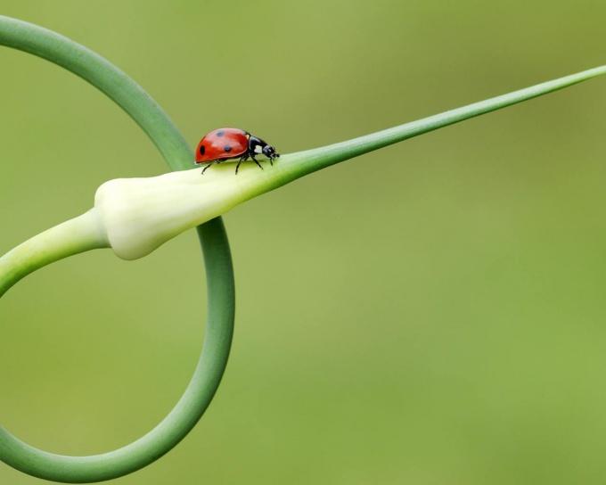 стрелкование лука