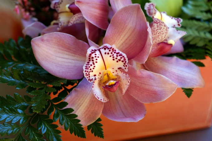 How to repot orchids at home
