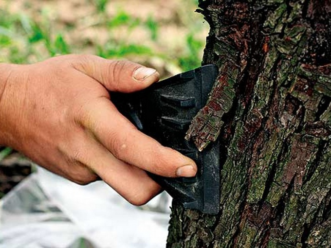 лечение ран и дупел на деревьях