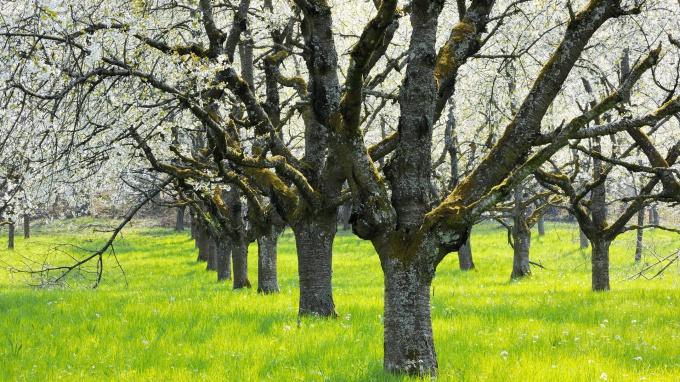 Как засушить дерево на корню незаметно