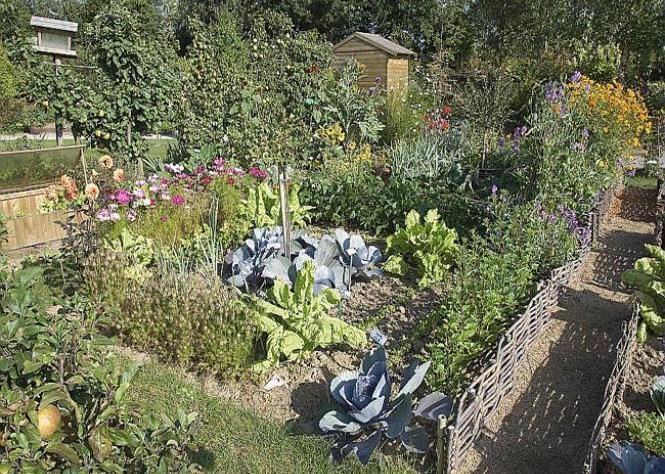 Выбор дорожек для огорода