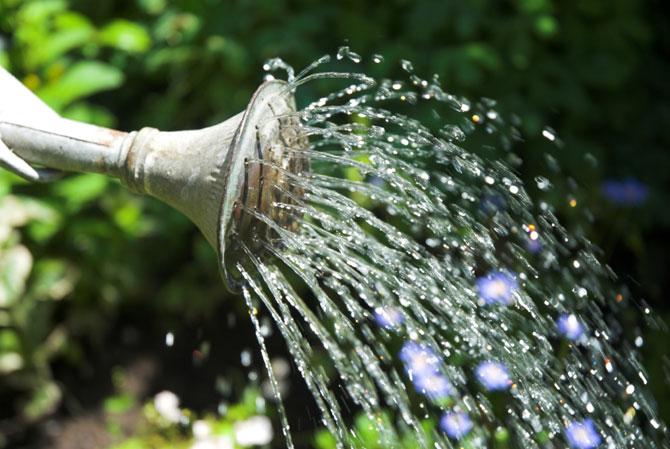 Какой водой следует поливать овощи на даче