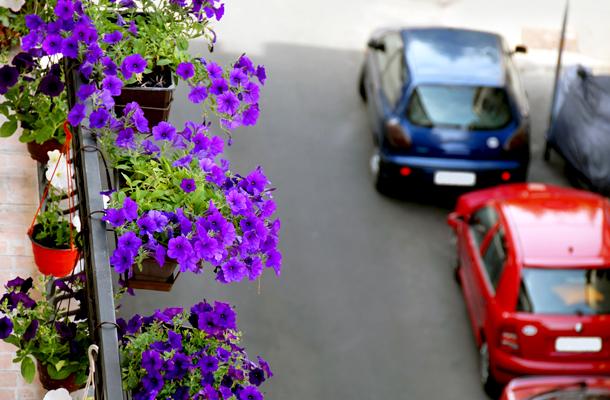 Почему не цветет петуния на балконе летом