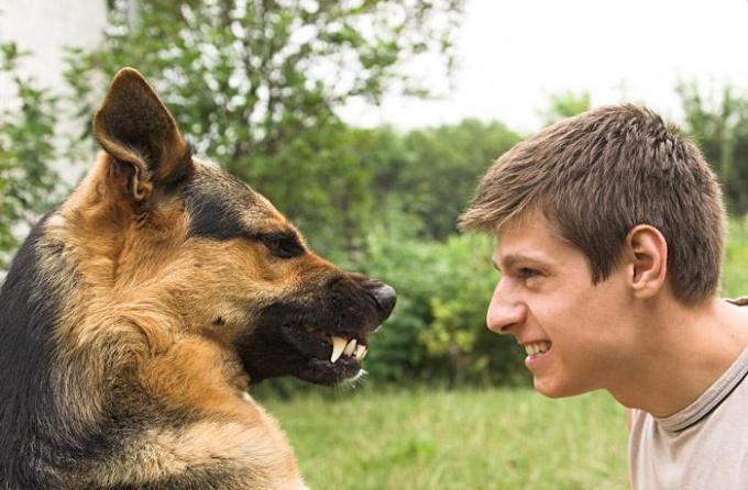 Как действовать, если укусила собака