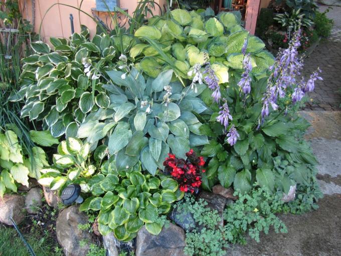 тенистый уголок в саду