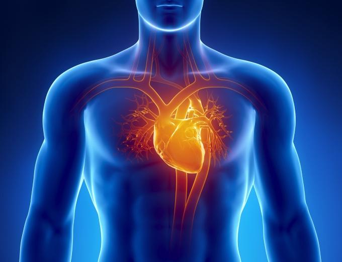 Защитить сердце от опасных факторов - значит продлить свою жизнь