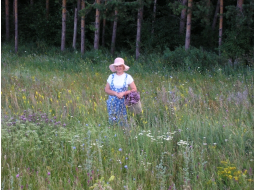 Как верно собирать, сушить и беречь целебные травы