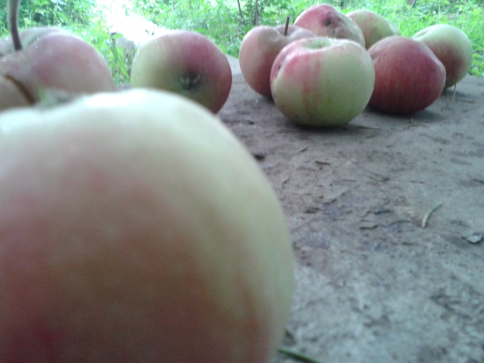 Какими полезными свойствами обладают деревенские яблоки