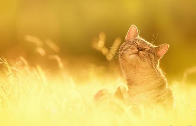 Как фотографировать летними солнечными днями