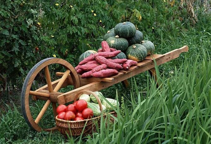 Как сохранить урожай в квартире