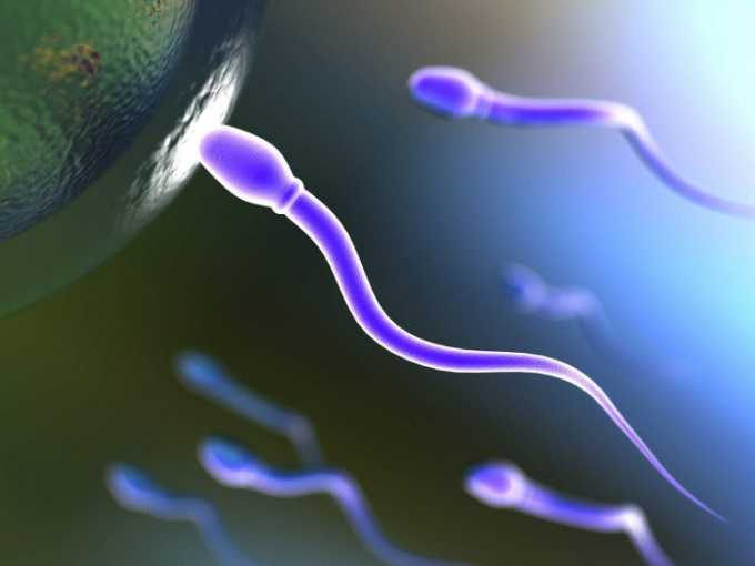 Спермограмма нормы