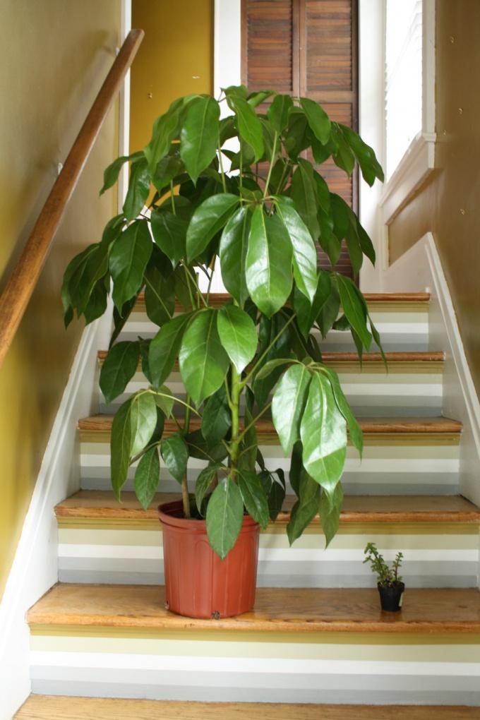 Рекомендации по выбору комнатных растений