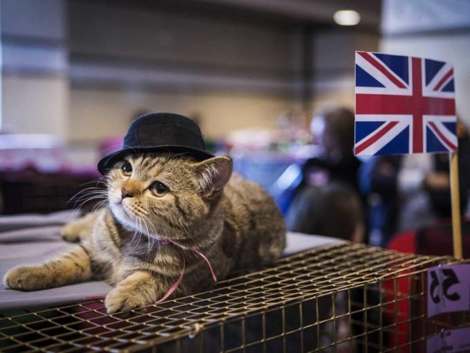 История кошек в Великобритании
