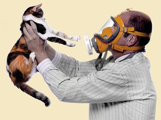 Аллергия на домашних питомцев — не беда