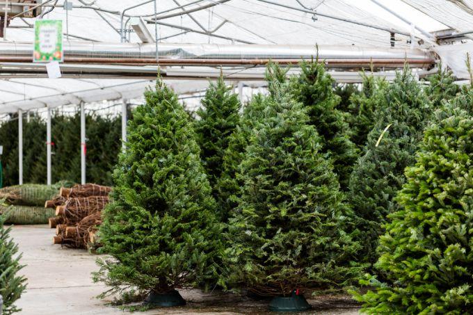 Уход за новогодней елкой