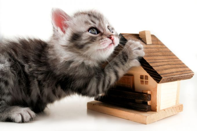 Как просто сделать дом для кошки