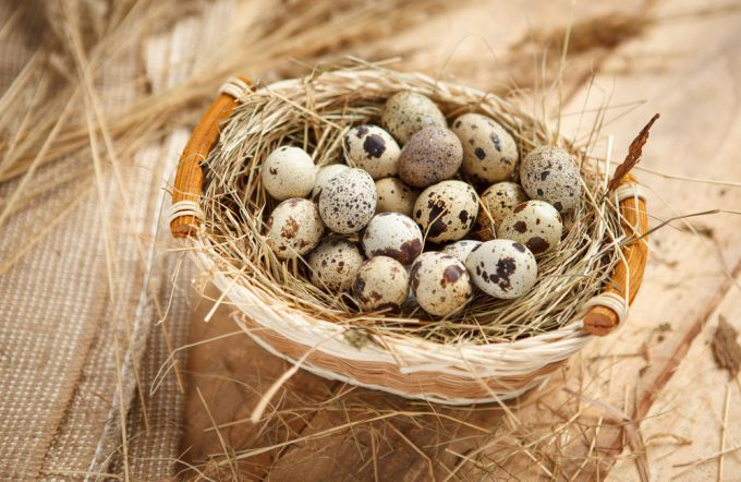 Польза перепелиных яиц для организма человека