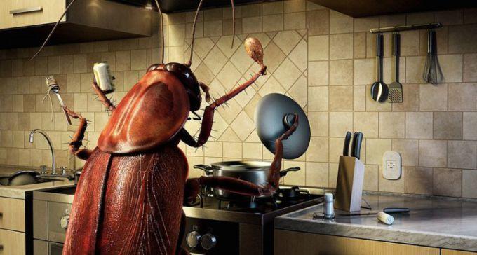 Как травить тараканов