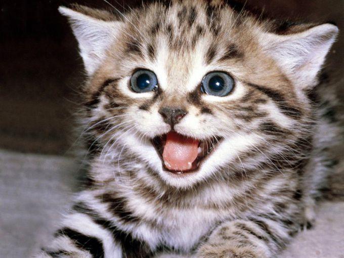 Выбирайте для кота прекрасное и громкое имя