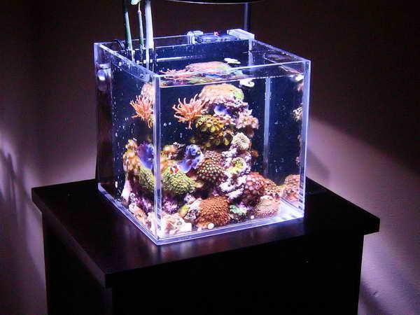 Мини-аквариум настольный