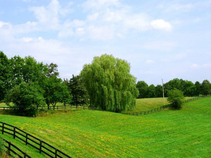 Кто может получить земельный участок бесплатно