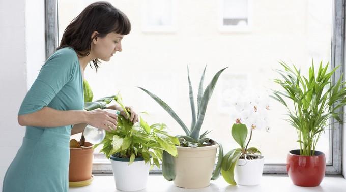 Комнатные  растения. Мы  выбираем...