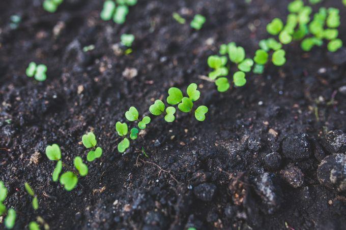 Что посадить в феврале на рассаду