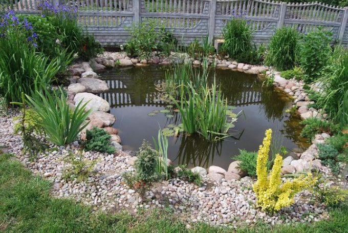 The best plants for garden pond