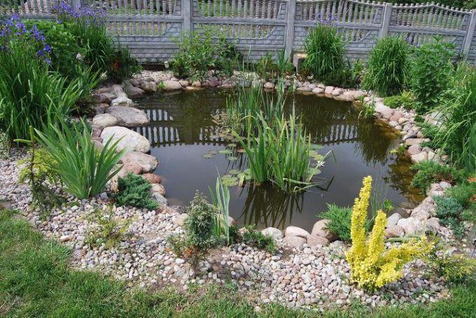Лучшие растения для садового водоема