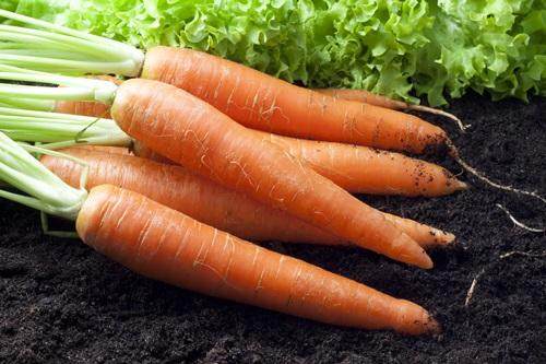 How to sow carrots: 2 secrets of productivity