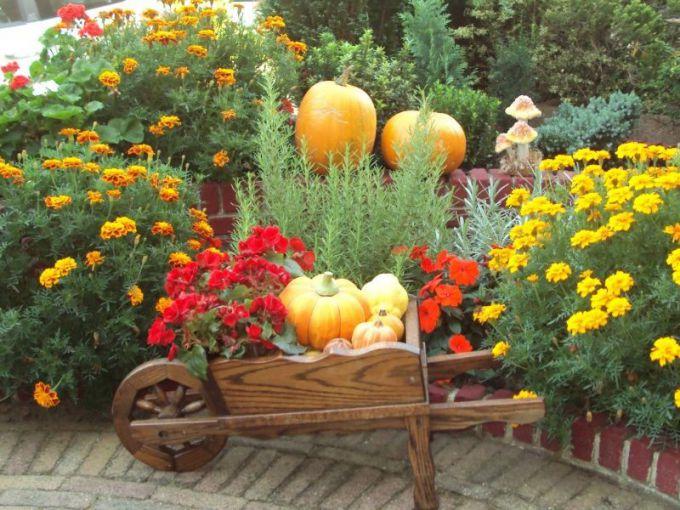 Как организовать непрерывное цветение