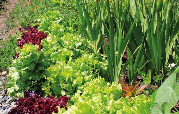Совместимость растений ?? Цветоводство