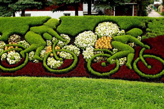 Декоративные кустарники для живой изгороди