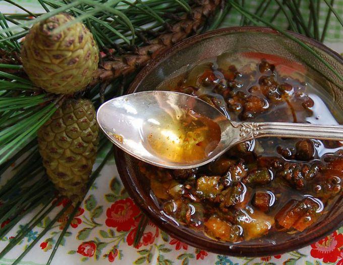 мед из шишек и побегов сосны
