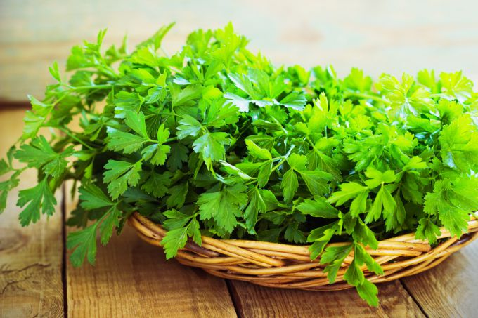 Parsley grown on the dacha