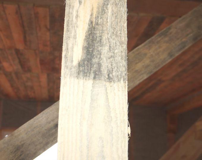 грибок на древесине