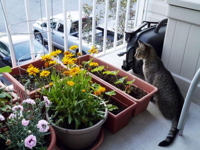Как превратить маленький балкон в сказочный цветущий садик ??.