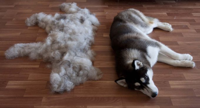 Features of pet care during moulting
