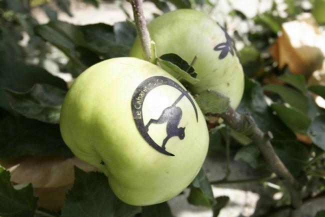Как маркировать яблоки