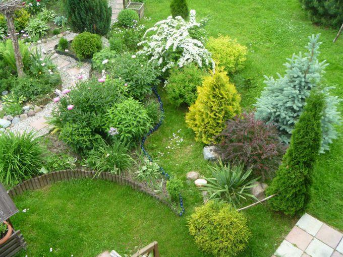 Оформление сада декоративными хвойными растениями