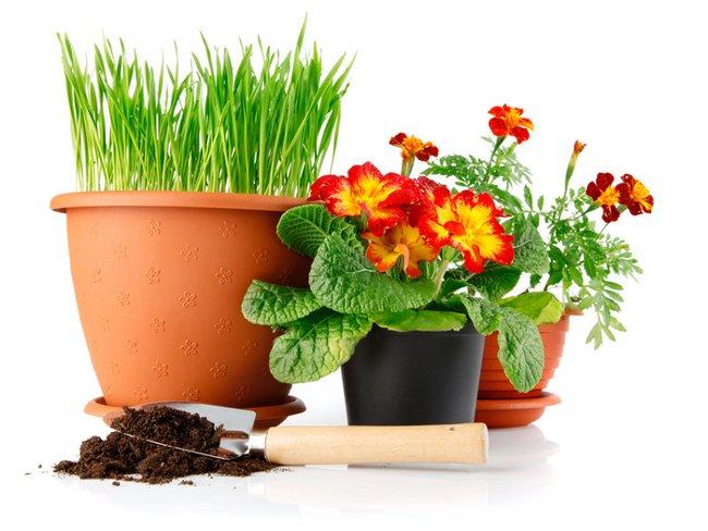 Пересадка растений – главная составляющая ухода