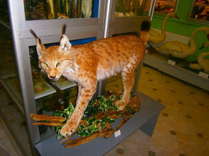 Как увидеть экспонаты в шикарном зоомузее в Симферополе