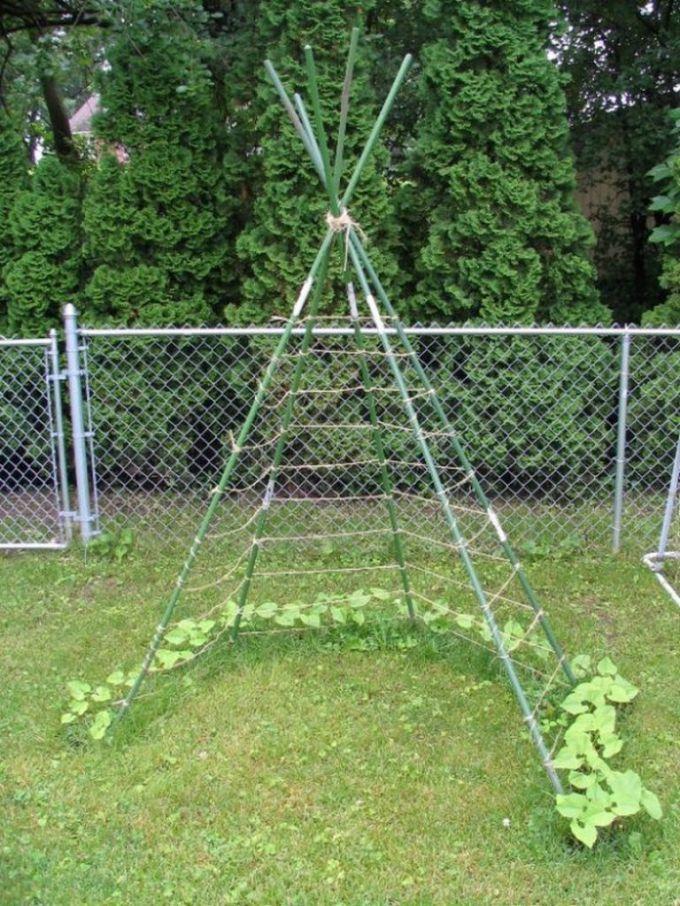 выращивание огурцов в шалаше