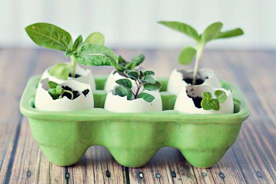 Какие семена нужно посадить в феврале