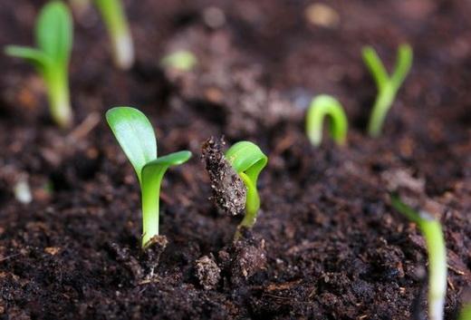 Как сажать растения в январе 2017 года по Лунному календарю