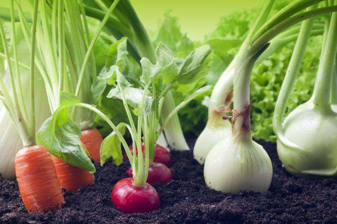 Какие овощные культуры можно сажать под зиму