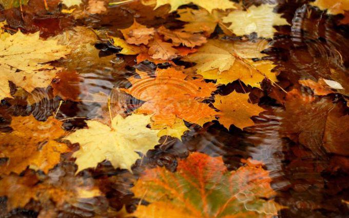 Какие народные приметы помогают предсказывать погоду в октябре