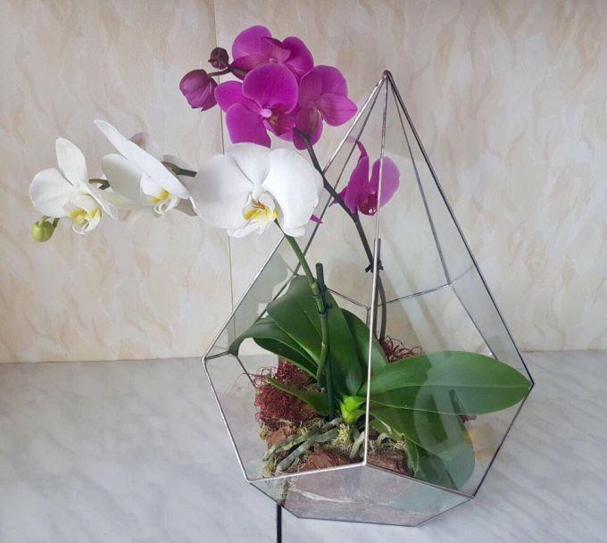 Орхидея в стеклянном флорариуме